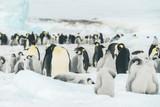 Colony of Emperor Penguins - Antarctica - 193540039