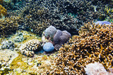 Tropical corals in Indian ocean. Scar reef at Bali