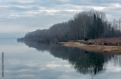 forest on mountain lake shore - 193582601
