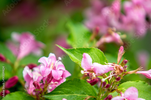 Little pink flowers background