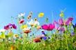 Grußkarte - bunte Blumenwiese - Sommerblumen - 193603609