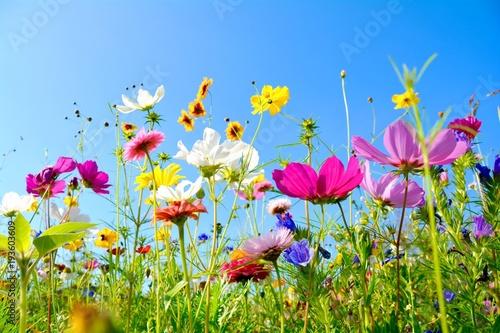 Leinwanddruck Bild Grußkarte - bunte Blumenwiese - Sommerblumen