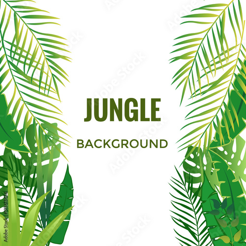 Fototapeta Jungle background. Jungle trees and plants. Vector illustration.