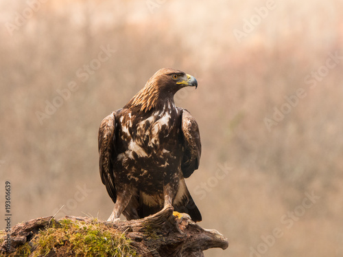 Aluminium Eagle The golden eagle, the buzzard, the marsh harrier, etc., are some of great birds of prey, displayed in different places of spain ...