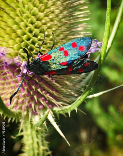 Aluminium Vlinder Beautiful Vibrant Butterfly