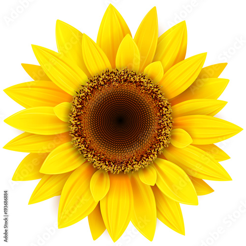 Wall mural Sunflower flower isolated
