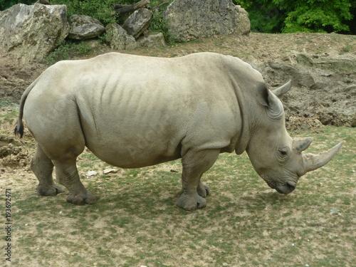 Plexiglas Neushoorn Rhinocéros
