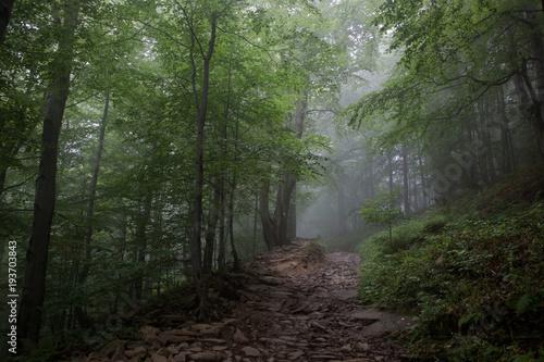 Staande foto Weg in bos Mgła w bieszczadach