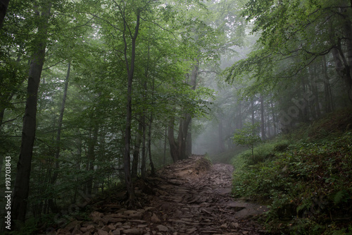 In de dag Weg in bos Mgła w bieszczadach