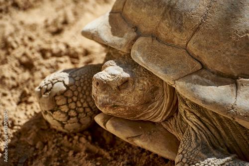 Aluminium Schildpad Turtle meditating