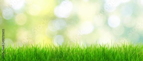 Fotobehang Gras Gras im Frühling