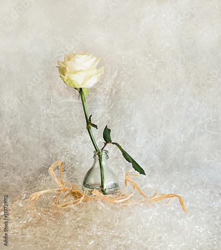 white rose over white background © TTLmedia