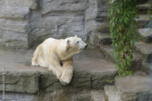 Aluminium Ijsbeer Polar bear