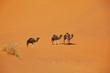 Leinwandbild Motiv Caravan in desert