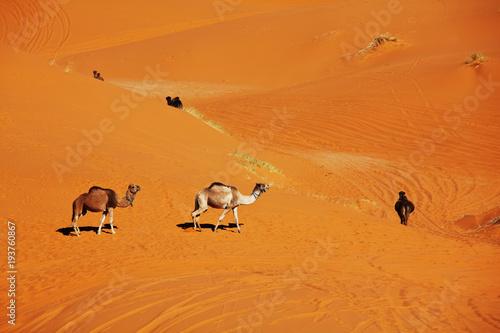 Leinwanddruck Bild Caravan in desert