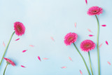 Beautiful spring background with pink flowers and petals. Floral frame. Flat lay style. - 193761664