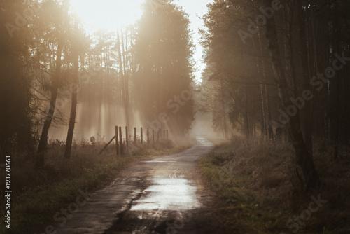 Staande foto Weg in bos Mglista droga o zachodzie słońca