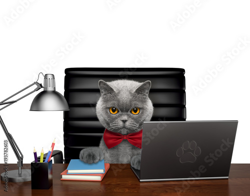 Fototapeta Cute cat manager is doing some work on the computer. Isolated on white