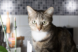 portrait pretty cat at home kitchen