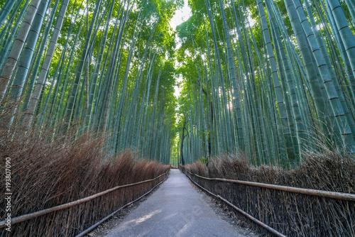 Fotobehang Bamboe Early morning Wide Angle view of path and sunrays at Sagano Arashiyama Bamboo forest in Kyoto, Japan