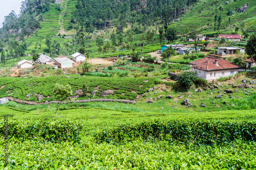 Foto op Canvas Lime groen Tea plantations and a small village in mountains near Haputale, Sri Lanka