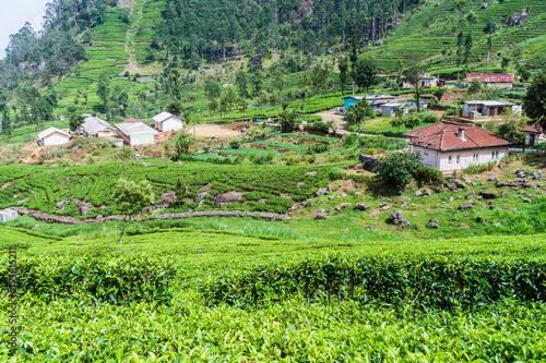 Keuken foto achterwand Lime groen Tea plantations and a small village in mountains near Haputale, Sri Lanka