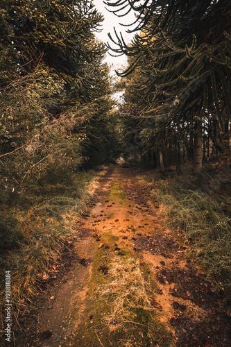 Staande foto Weg in bos Camino infinito en el bosque