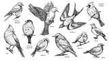 Birds hand drawn vector illustration. - 193828664