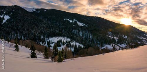 Aluminium Zwart winter panorama in mountains at sunrise. forested hills of mountain ridge and some trees on snowy slopes