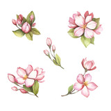 Set of flowering branches of sakura. Hand draw watercolor illustration. - 193837005