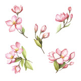 Set of flowering branches of sakura. Hand draw watercolor illustration. - 193837020