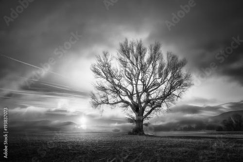 drzewo-o-wschodzie-slonca