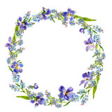 Wreath of forgot-me-nots and violets. Watercolor.