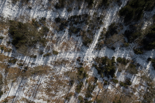 Poster Stenen winter forrest from above