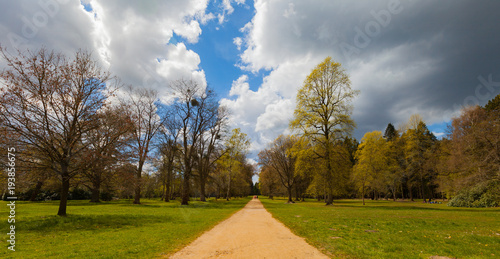 Tuinposter Weg in bos Tranquil yellow pathway surrounded by trees with a dramatic sky in the background. Wide angle.