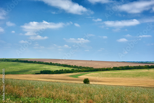 Aluminium Zomer beautiful summer landscape, green field and bright cloudy sky