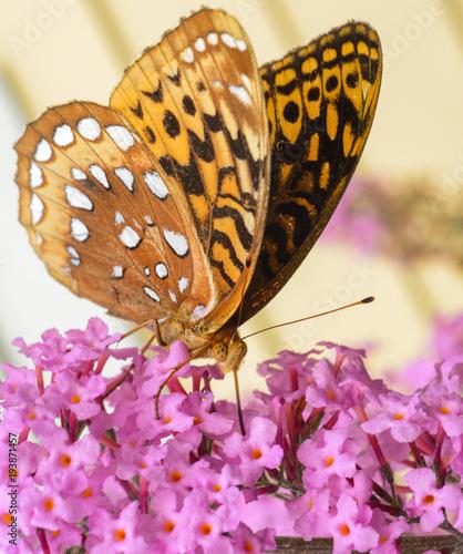 Aluminium Vlinder butterfly on pink flowers