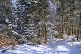 Fototapeta  - Las w zimie © bnorbert3