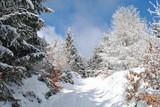 Fototapeta  - Pejzaż zimowy © bnorbert3