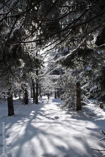 Tuinposter Weg in bos Pejzaż zimowy