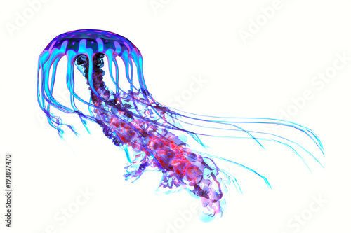 Fototapeta Blue Red Jellyfish - The ocean jellyfish searches for fish prey and uses its poisonous tentacles to subdue the animals it hunts.