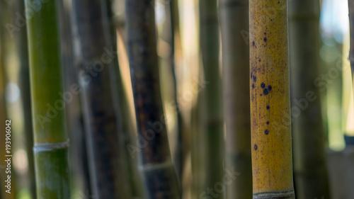 Fotobehang Bamboe Bamboo Pattern 02