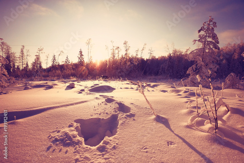 Fotobehang Zalm nature landscape winter forest frosted