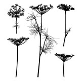 Dill silhouette isolated on white. - 193917870