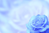 Blurred background with rose of blue color