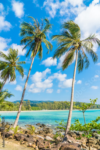 Fotobehang Caraïben Coconut palm tree on the beach and sea