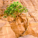 tree on the rock - 193943450