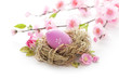 easter eggs in bird's nest and cherry blossom flowers on white background