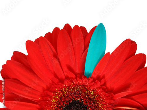 Aluminium Gerbera Gerbera's petals isolated on white, as a floral background.