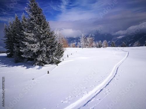 Skispur Bäume Sonne Wolken